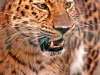 4. Wolfgang Hiob – Leopard – 7,000 Punkte